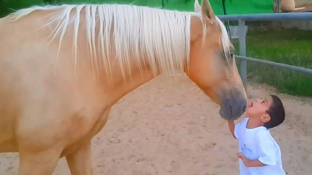 horseMeetsBoy