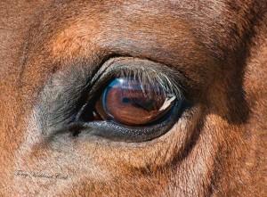 horsesVision